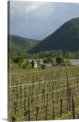 Austria, Wachau Valley, Lower Austria, Durnstein, vineyard