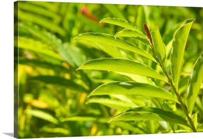 Barbados, Bathsheba, Andromeda Botanic Gardens, Tropical Vegetation