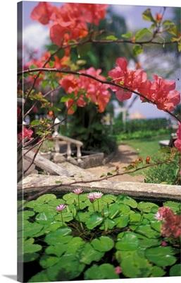 Barbados, Coral Reef Club entrance. Tropical blossoms