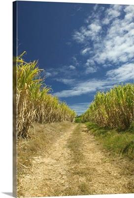 Barbados, North East Coast, St. Nicholas Abbey, Sugar Plantation