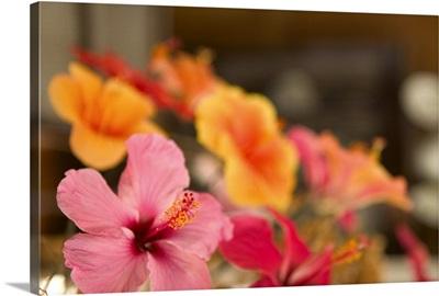 Barbados, St. Nicholas Abbey Museum, Flower Arangement