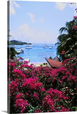 Beautiful flowers and boats of Sunsail Lagoon in St. Vincent and the Grenadines