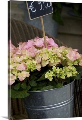 Belgium, West Flanders, Bruges, flowers for sale