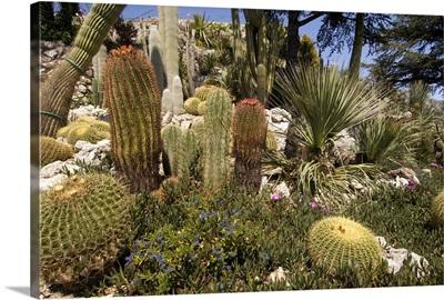 Botanic Garden, Eze-Village, Cote D'Azur, France