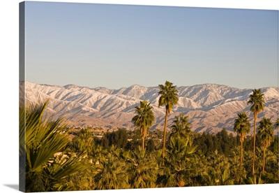California, Palm Springs. Palms and San Bernardino Mountains, sunrise