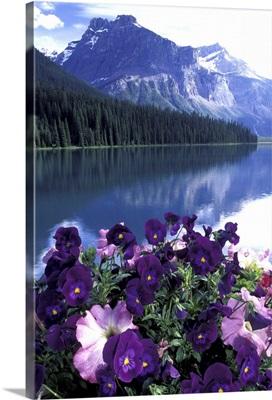 Canada, Alberta, Banff National Park. Pansies and Emerald Lake