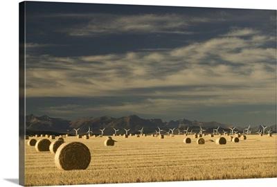 Canada, Alberta, Crowsnest Pass Area, Cowley Ridge Wind Farm with Hayrolls
