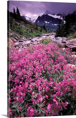 Canada, Alberta, Jasper National Park, Tanquin Valley, wildflowers