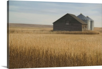 Canada, Alberta, Rosebud, Grain Barn, Wheat Farm