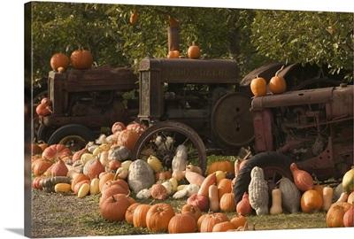 Canada, British Columbia, Keremeos. Autumn Harvest, Pumpkins