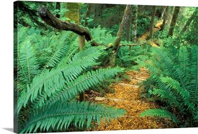Canada, British Columbia, Vancouver Island, Comox Valley, woodchip path