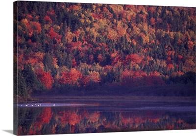 Canada, New Brunswick. Fall colors