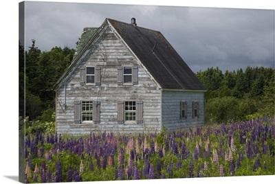 Canada, Prince Edward Island, Cavendish, Farmhouse, Lupins