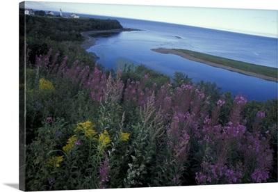 Canada, Quebec, Gaspe Peninsula (Gaspesie). Coastal wildflowers