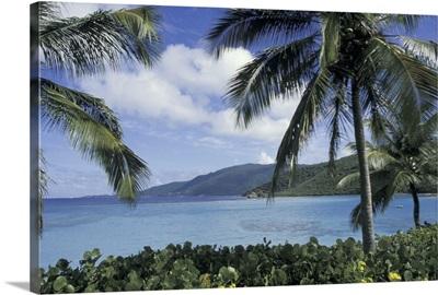Caribbean, British Virgin Islands, Virgin Gorda, Little Dix Bay through palm trees