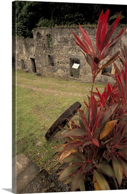 Caribbean, French West Indies, Martinique; Anse Ceron Habitation Ceron sugar plantation