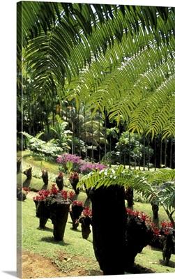 Caribbean, French West Indies, Martinique, Jardin de Balata, tropical plants