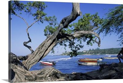 Caribbean, Jamaica, Treasure Beach. Acacia trees and boats