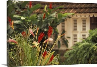 Caribbean, Martinique, Le Francois, Habitation Clement, rum plantation, tropical flowers