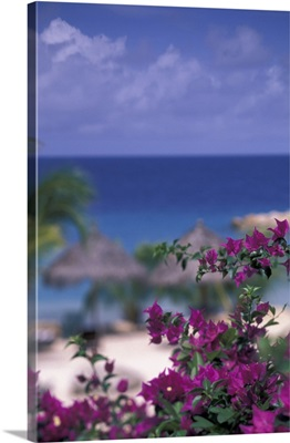Caribbean, Netherland Antilles, Curacao, Tropical setting