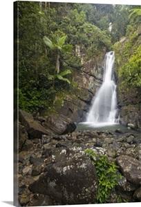 Caribbean Puerto Rico El Yunque Rain Forest La Mina