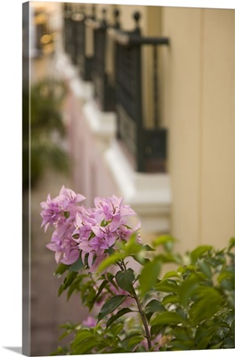 Caribbean, Puerto Rico, Old San Juan. Flowers and wrought-iron balconies