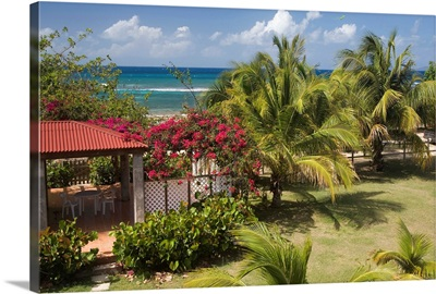 Caribbean, Puerto Rico, Vieques, garden and palm trees