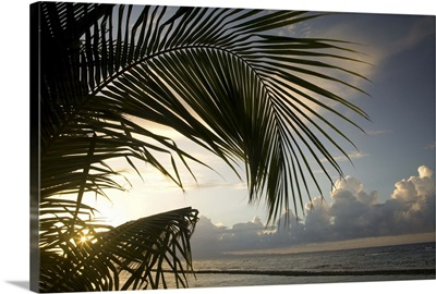Caribbean, Puerto Rico, Vieques. Palm frond and beach at sunset