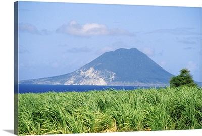 Caribbean, St. Kitts. Sugar Cane fields