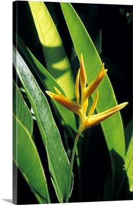 Caribbean, St. Lucia, Soufriere, Plants at the Diamond Botanical Garden