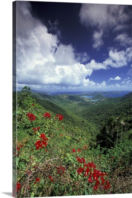 Caribbean, US Virgin Islands, St. John, Coral Bay, bougainvilla flowers