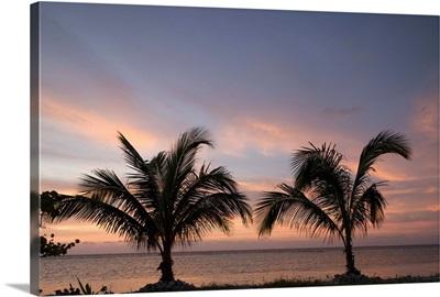 Cayman Islands, Little Cayman Island, palm trees at sunset