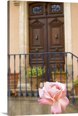 Chateau Mansenoble, In Moux, Les Corbieres, Languedoc, A Door, Rose Flower, France