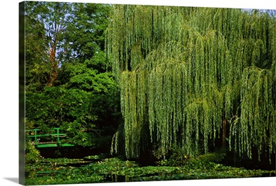Claude Monet's garden pond in Giverny, France