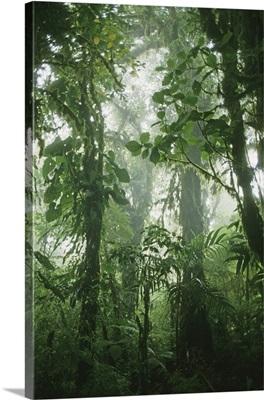 Costa Rica, Monteverde, Monteverde Cloud Forest Reserve