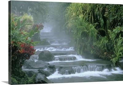 Costa Rica, Tabacon Hot Springs, tropical vegetation along natural hot springs