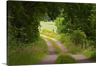 Country Road. Through The Forest. Smaland Region. Sweden, Europe
