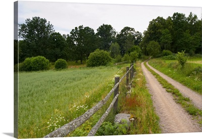 Country Road, Wooden Fence And Field. Through The Forest. Sweden