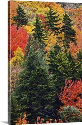 Fall colors in the Appalachian Mountains, North Carolina