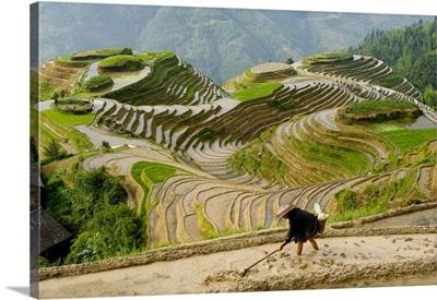 Farmer preparing field for planting rice, Dragon's Backbone Rice Terraces, China