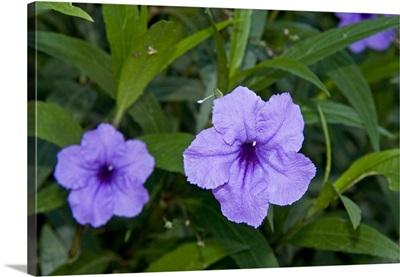 Flowers, Antigua, West Indies, Caribbean, Central America