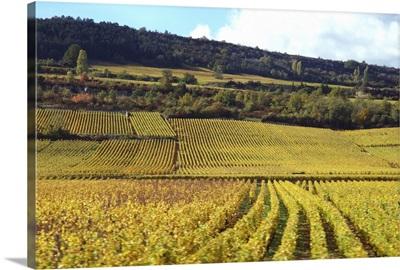 France, Burgundy, vineyards near Beaune
