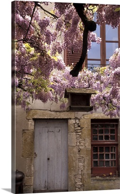 France, Burgundy, Yonne, Vezelay, Spring Flowers