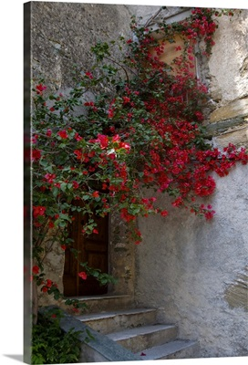 France, Corsica, Bougainvillea In Bloom Above Entrance To House In Oletta