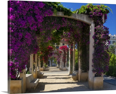 France, Corsica, Flowers In Bloom On Arbors Above Walkway At Place De Gaulle, Ajaccio