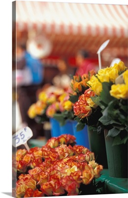 France, Cote D'Azur, French Riviera, Nice, Cours Saleya, Old Nice, Flower Market