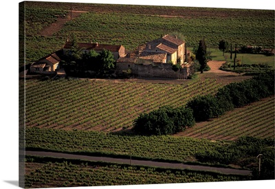 France, Provence, Vaucluse, Beaumettes, Overview Of Vineyard In Spring