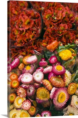 France, Reunion Island, St-Paul, Seafront Market, Flower Market