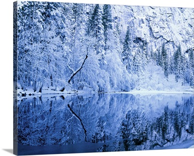 Fresh snow on trees along Merced River, Yosemite National Park, California