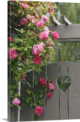 Garden gate with roses growing over it